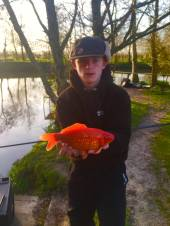 You don't see one of these every day!  This is Ben Burgoyne with a lovely koi carp caught on double sweetcorn from the island of the Match Lake.