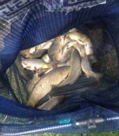 One of Keith Goodwin's lovely mixed bags from Rushcombe Lake