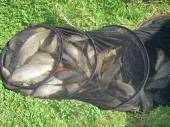 Martin Jones from Whitchurch caught this lovely bag of fish on Rushcombe Lake.