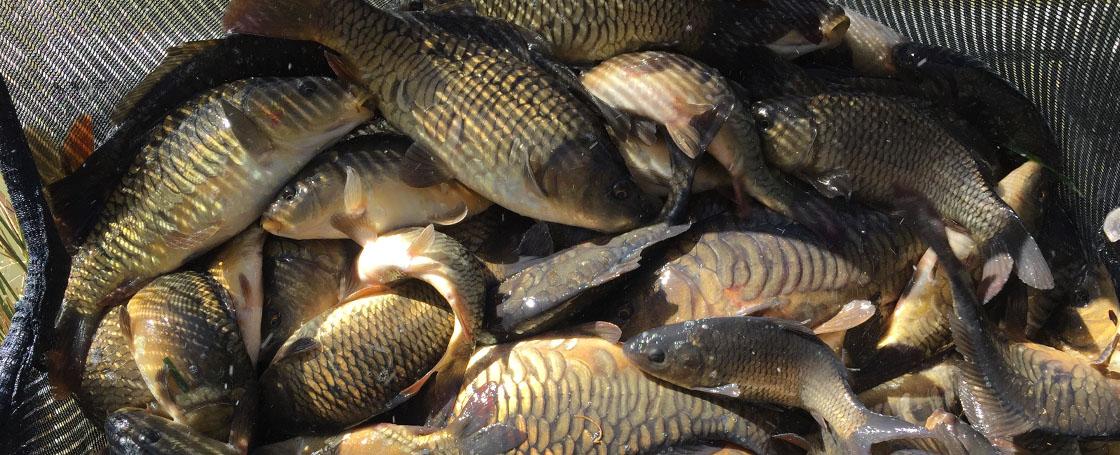 Bullock farm fishing lakes latest news for Fish net company